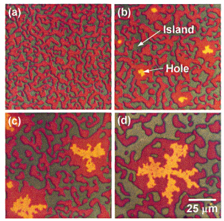 Dual_Morphology_of_Islands_and_Fractal_holes_in_Block_Copolymer_Thin_Films